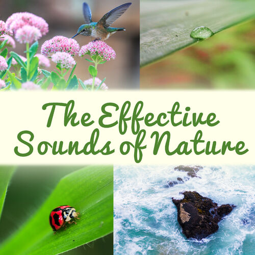 Serenity Nature Sounds Academy: The Effective Sounds of Nature: The