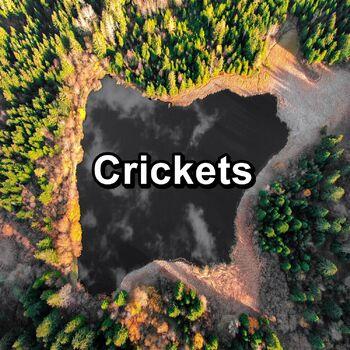 Cicadas Sound cover