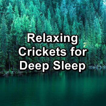 Calming Cicada Sounds cover