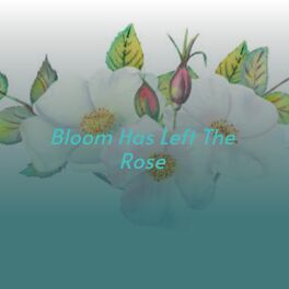 Album cover of Bloom Has Left the Rose