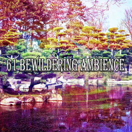 Album cover of 61 Bewildering Ambience