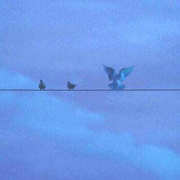 Bluebird Fly cover