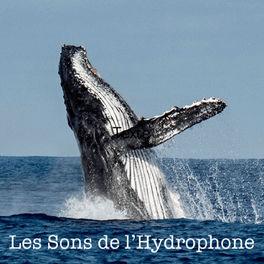 Show cover of Les Sons de l'Hydrophone
